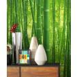 Flora Bambus